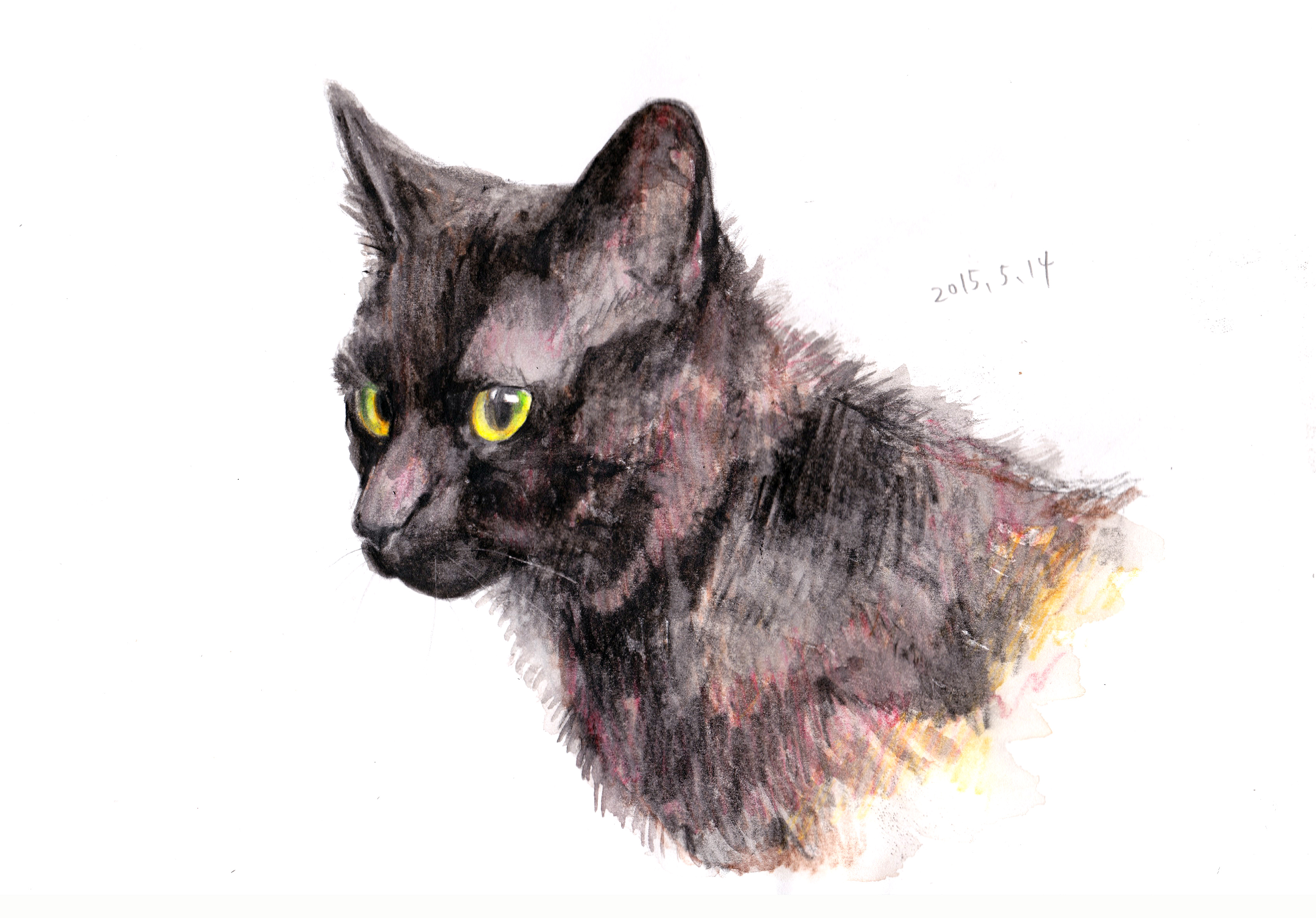 水彩色鉛筆で写実的に猫を描く。 | もじゃクッキー
